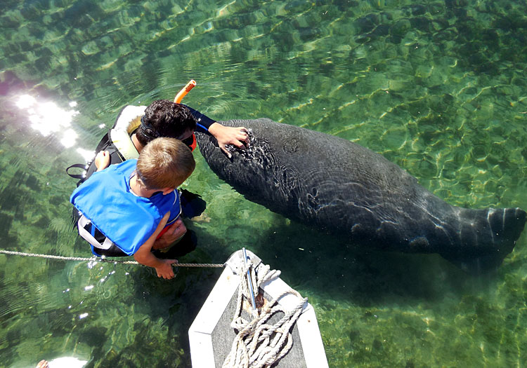 Kids of All Ages Love Crystal River Florida Manatees