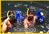 Florida Scalloping Trips