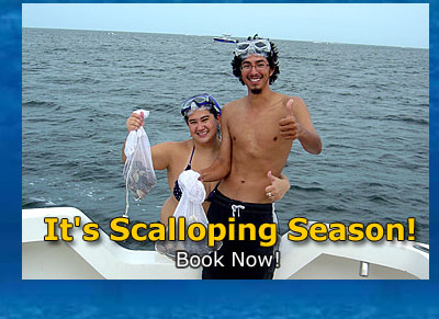 Crystal River Scalloping Trips